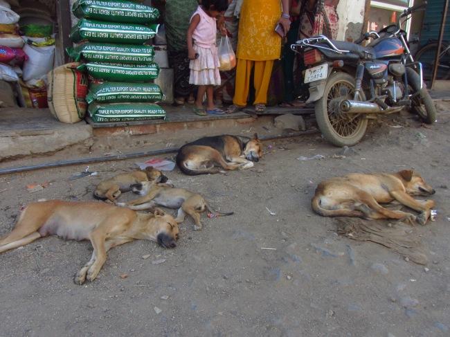 Sleeping dogs on a road in Nallasopara, Mumbai. Photo credit: Daniel Kronovet